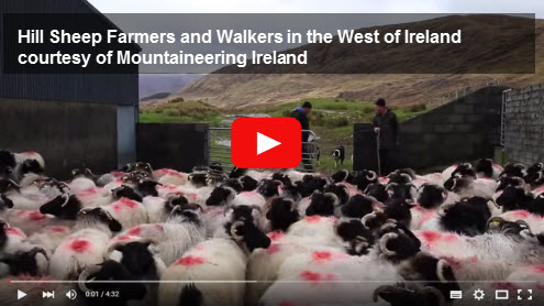Hill Sheep Farmers and Walkers in the West of Ireland Video courtesy of Mountaineering Ireland